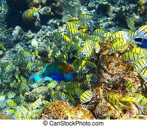 big school of fish near a corals