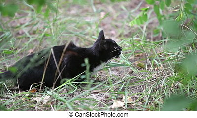 Black cat jumping in the grass