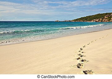 footprints on sandy beach - Lonely footprints are on sandy...