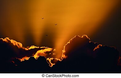 Three birds in a wonderful sunset sky