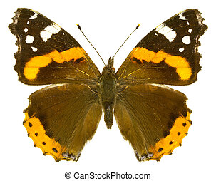 Vanessa atalanta - The Red Admiral Vanessa atalanta isolated...