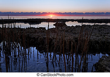 Sunrise in South Florida Wilderness with Mangrove Shoots