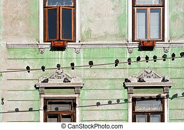 Pigeons on wires, house windows on background