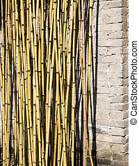Bamboo Plant - Vertical bamboo plants grown infront of...