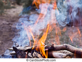 burning branches fire