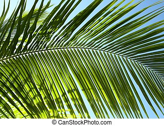 Palm tree leaf N3 - Palm tree leaf and the blue sky