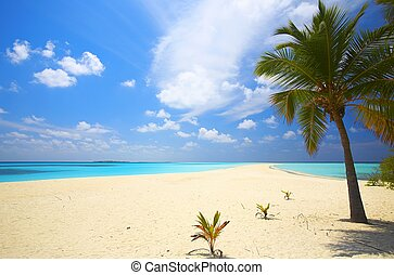 Infinity tropical beach on the island Kuredu in the Indian...