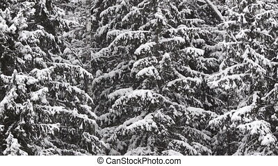 Winter forest, different views