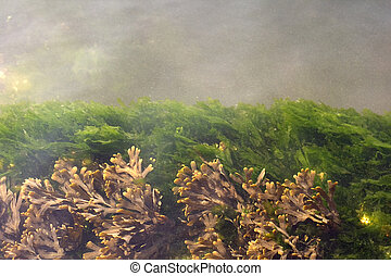 Algae and other vegetation on water