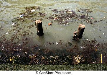 Dirty water - Algae in the dirty water