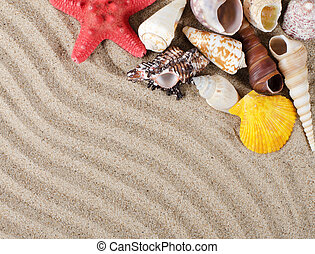 The sea shell as a background