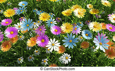 Flowers of different colors, in a grass field. - Close up...
