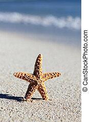 little seastar