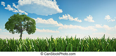 Solitary tree in a grass field.