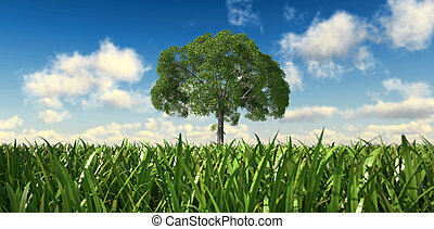 Isolated tree in a grass field, viewed from a low point of...
