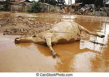 Dead Water Buffalo on Mud - A half buried on mud water...