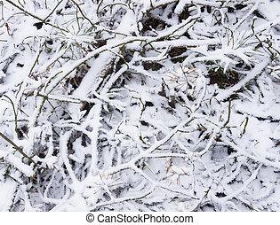 Brushwood under snow.Natural background.