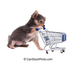 Chihuahua puppy and shopping cart - Tiny Chihuahua puppy...