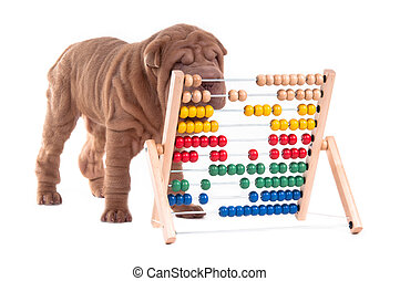 Smart sharpei puppy is learning how to count - Sharpei puppy...
