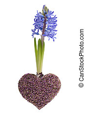 Blue spring hyacinth and lavender heart