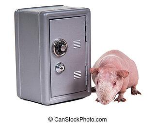 Guinea pig and a safe