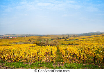 Autumn vineyard fiels in Europe winegowing region