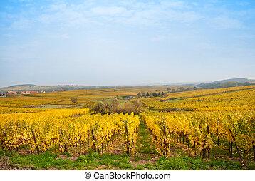 Autumn vineyard fiels in Europe winegowing region
