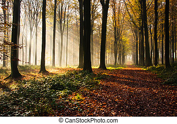 Forest light - Autumn in Brakelbos, a forest in Flanders