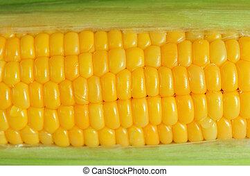 Corn Cob - A close up of a cob of corn