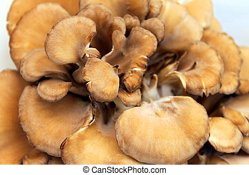 Maitake Mushrooms - Maitake mushrooms in a basket at the...