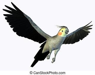 cockatoo,  2, voando