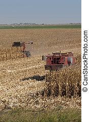 Combines Harvest Corn - Combines harvest dry corn.