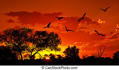 Landscape of Africa with warm sunset, beautiful nature,...