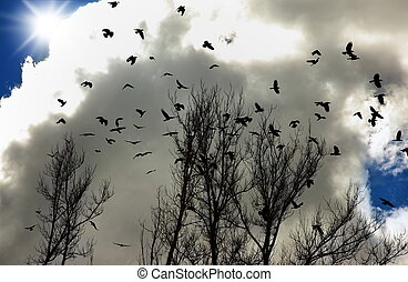 Flock of crows - flock of crows up in the sky