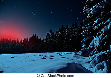 winter forest at night - The winter forest, night scene...