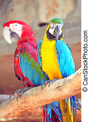 Jerusalem Biblical Zoo - Blue Red and yellow Macaw Parrots...
