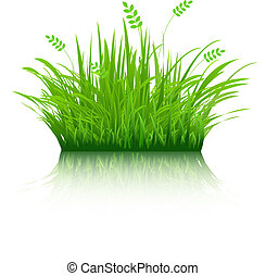 Eco Grass, Isolated On White Background, Vector Illustration...