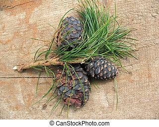 Pinus sibirica cones