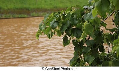 dirt city river and linden tree