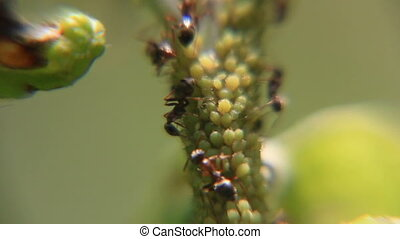 Ants on the plant part close-up