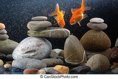 Couple goldfish in aquarium over well-arranged zen stone and...