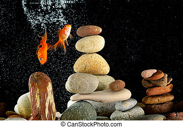 Couple goldfish in aquarium - Couple goldfish in aquarium...