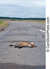 Death on the road - fox hit by a car on the road