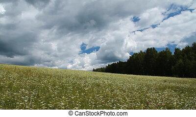 Wild Grass 5