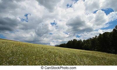 Wild Grass 6