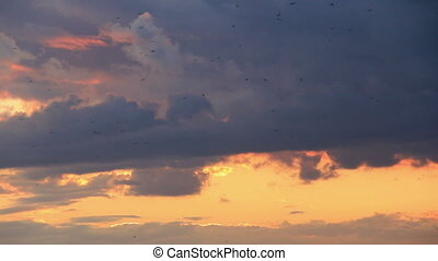 Crow flock flight at background colorful sky
