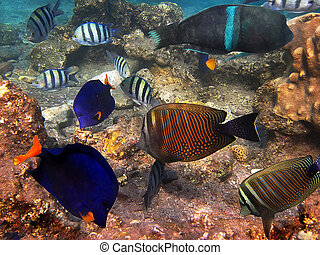 Fish of the Red Sea1