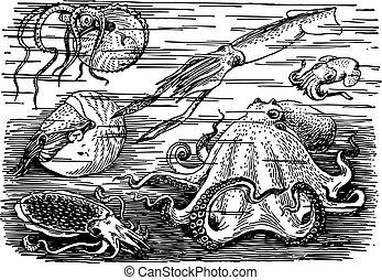 Underwater - Many different sea animals underwater