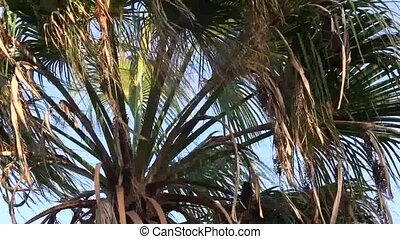 Palm tree blowing on the wind.