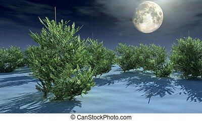 christmas trees under moonlight